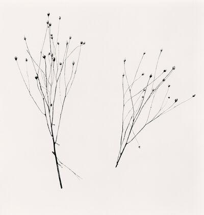 Michael Kenna, 'Two Winter Stalks, Biei, Hokkaido, Japan', 2013