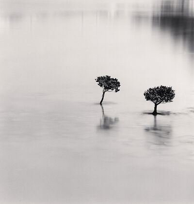 Michael Kenna, 'Two Mangrove Plants, Lantau Island, Hong Kong', 2007