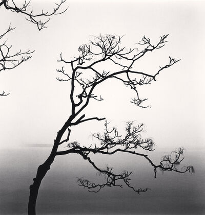 Michael Kenna, 'Alianthus Tree and Yangze River, Study 2, Nantong, Jiangsu', 2015
