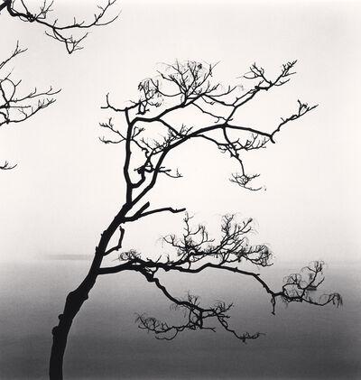 Michael Kenna, 'Alianthus Tree and Yangze River, Study 2, Nantong, Jiangsu', 2015