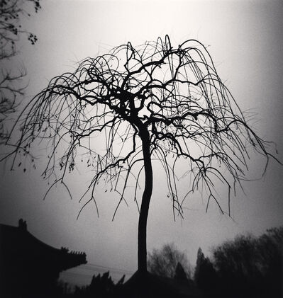 Michael Kenna, 'Forbidden City Tree, Beijing, China', 2007
