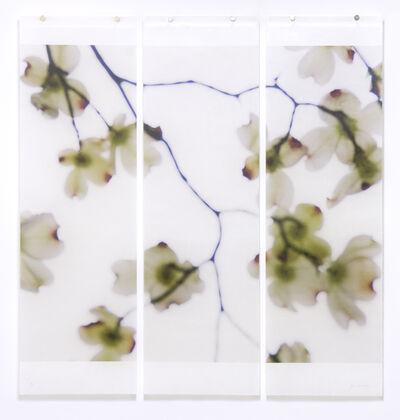 Jeri Eisenberg, 'Dogwood (White- Red Tips), No. 3', 2018