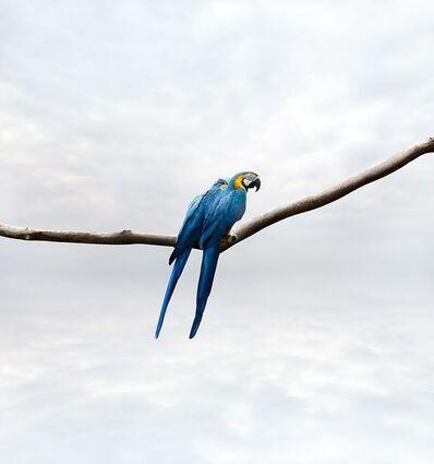 Alice Zilberberg, 'Pondering Parrots', 2019