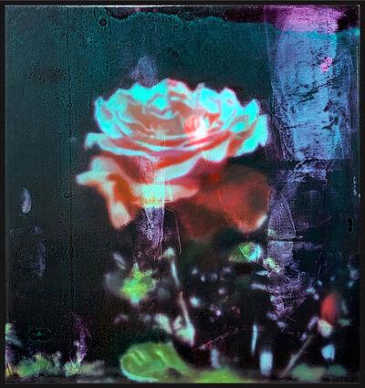Wendelin Wohlgemuth, 'Small Rose', 2020