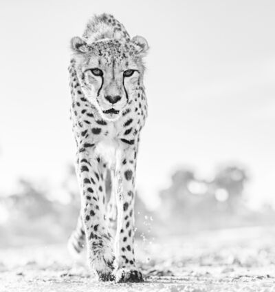David Yarrow, 'Hot Legs', 2019