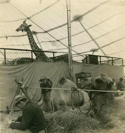 Rudy Burckhardt, 'CIRCUS ANIMALS IN A TENT', 1940