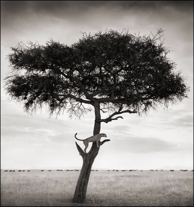Nick Brandt, 'Cheetah in Tree, Maasai Mara, 2003', 2003