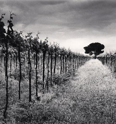 Michael Kenna, 'Vineyard and Stone Pine Tree, Cepagatti, Abruzzo, Italy', 2016