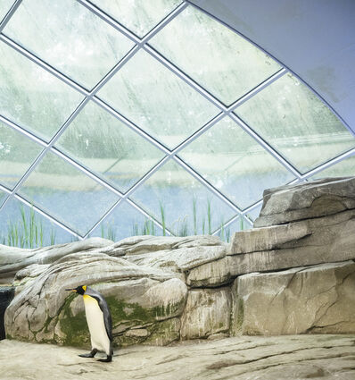 Eric Pillot, 'Penguin and Dome', 2012