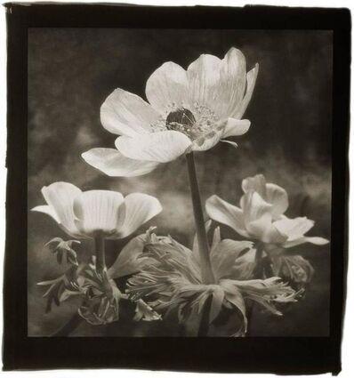 Cy DeCosse, 'Lilies of the Field'