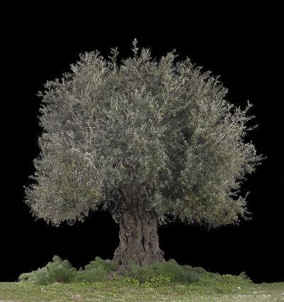Tal Shochat, 'Beit Jimal, Black', 2017
