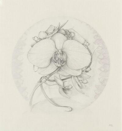 Marta Chirino, 'Phalaenopsis VI', 2015