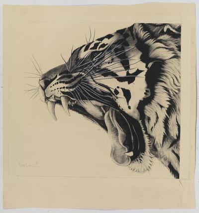 Rose Corcoran, 'Yawning Tiger'