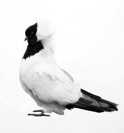 Jonathan Delafield Cook, 'Dove III', 2016