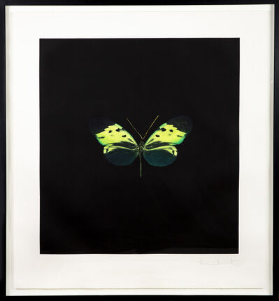 Damien Hirst, 'The Souls on Jacobs Ladder Take Their Flight Green Butterfly', 2007