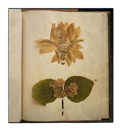 Annie Leibovitz, 'Emily Dickinson's Herbarium, Houghton Library, Harvard University, Cambridge, Massachusetts', 2010