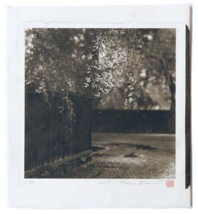Toshio Enomoto, 'Shidare-zakura in a samurai residence garden, Kakunodate, Akita', 2014