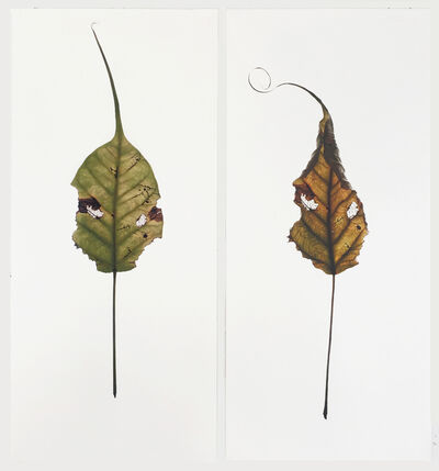 luisa sartori, 'Banyan Leaves (deail)', 2015
