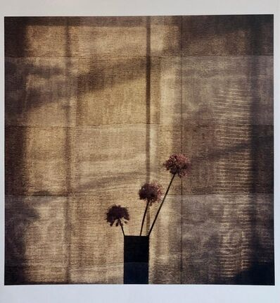 Peter C. Jones, 'Checkered Alliums, Large Format Photo 24X20 Color Photograph Beach House RI', 2000-2009