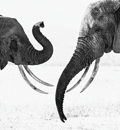 David Yarrow, 'Ivory Exchange'