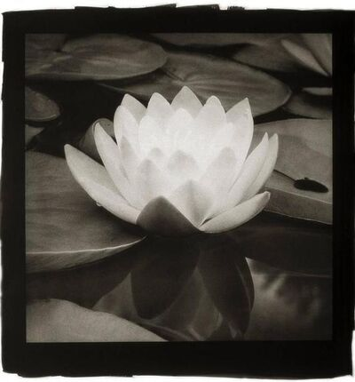 Cy DeCosse, 'Water Lily'