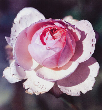 Tony Tasset, 'December Rose', 2001
