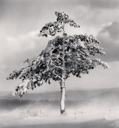 Michael Kenna, 'Michael Kenna, Tree in Snowdrift, Yangcao Hill, Wuchang, Heilongjiang, China.', 2011