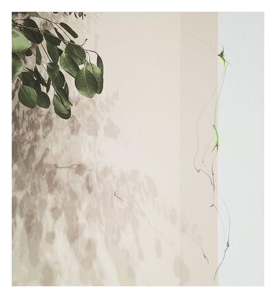 Sandi Haber Fifield, 'Untitled (LF 17 #163)', 2016