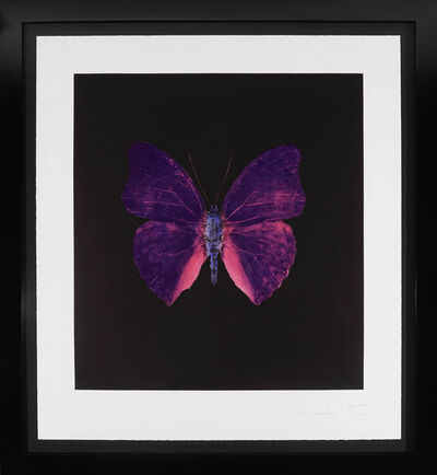 Damien Hirst, 'Butterfly Souls Etching, Violet ', 2007