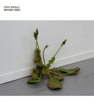 Tony Matelli, 'Weed', 2008