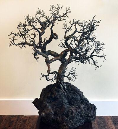 Bill Webb, 'Lookout Oak', 2018