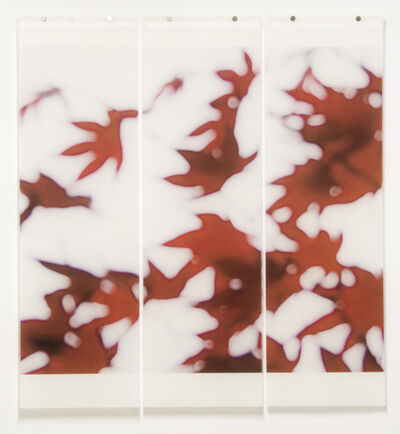Jeri Eisenberg, 'Japanese Maple', 2009