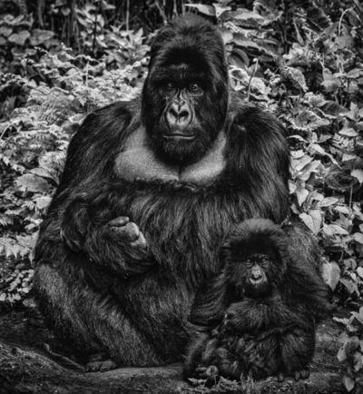 David Yarrow, 'Like Father Like Son', 2020
