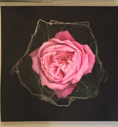 Portia Munson, 'Spiderweb Rose', 2009