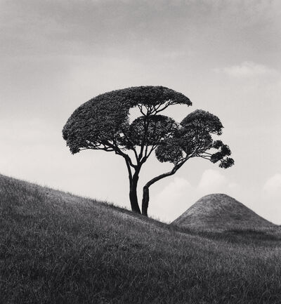 Michael Kenna, 'Tree and Mountain, Suizenji Joju-en Garden, Kumamoto, Kyushu, Japan', 2002