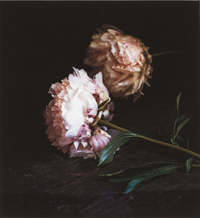 Craigie Horsfield, 'Two Peonies, Via Chiatamone, Naples, May 2010', 2014