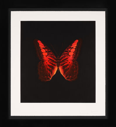 Damien Hirst, ''Red Butterfly' Etching ', 2008