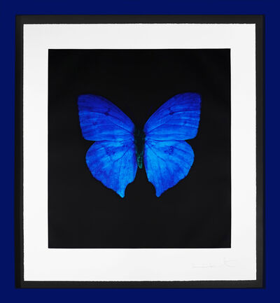 Damien Hirst, ''Butterfly Soul' Etching, Blue ', 2007