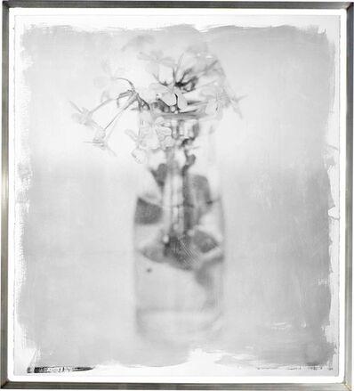 Stephen Inggs, 'Plumbago Sprig', 2011