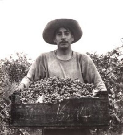 Pirkle Jones, 'Grape Picker, Berryessa Valley, California', 1956