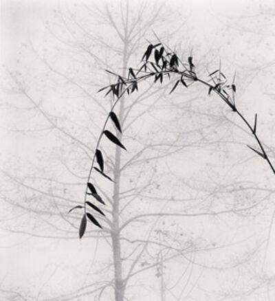 Michael Kenna, 'Bamboo and Tree, Qingkou Village, Yunnan, China', 2013