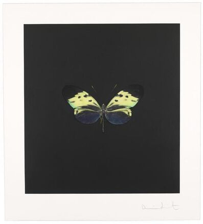 Damien Hirst, 'The Souls on Jacob's Ladder Take Their Flight (Plate 4)', 2007