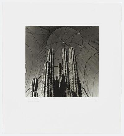 Graciela Iturbide, 'Garden', 2002