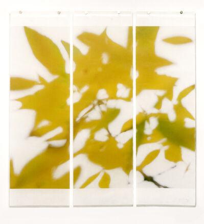 Jeri Eisenberg, 'Autumn Ash', 2014