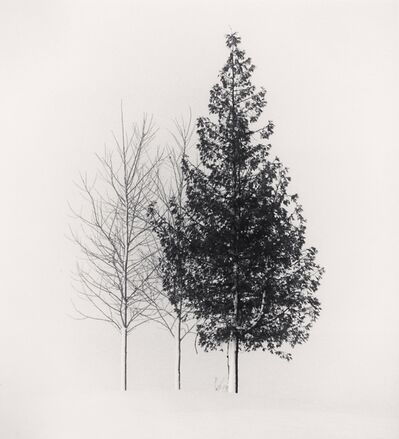 Michael Kenna, 'Tree Portrait, Study 4, Wakoto, Hokkaido, Japan. ', 2002