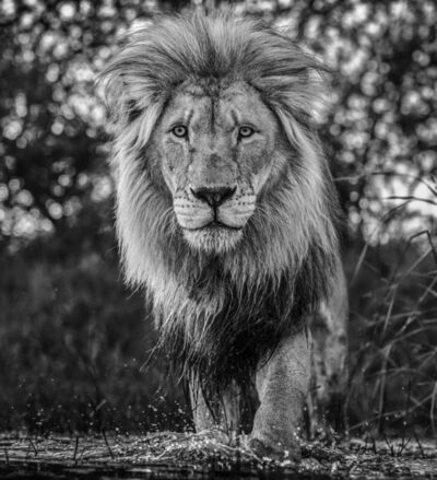 David Yarrow, 'Basic Instinct', 2020