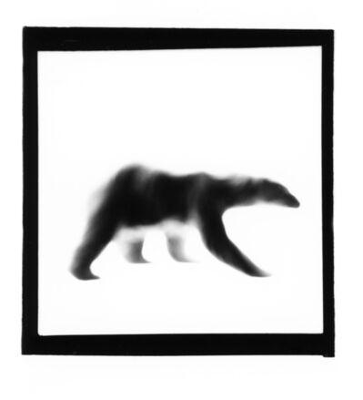 Marcus Davies, 'Polar Bear', ca. 2001
