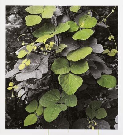 Honggoo Kang, 'Study of Green-Arrowroot', 2012