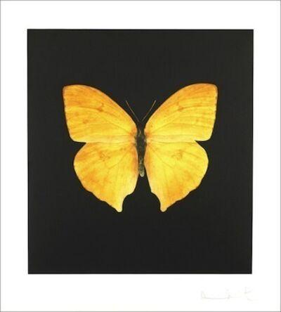 Damien Hirst, 'Large yellow', 2007