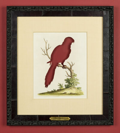 Brandon Ballengée, 'RIP Long-tailed Scarlet Lory: After George Edwards, 1750', 2015